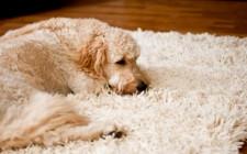 Выбираем ковёр как напольное покрытие