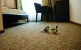 Правила эксплуатации ковровых покрытий