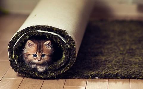 котёнок завёрнутый в ковер