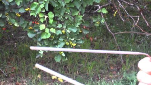 Поиск воды с лозой и маятниками